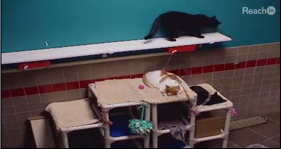 iPetCompanion: Zwei Katzen schlafen, eine Katze läuft.