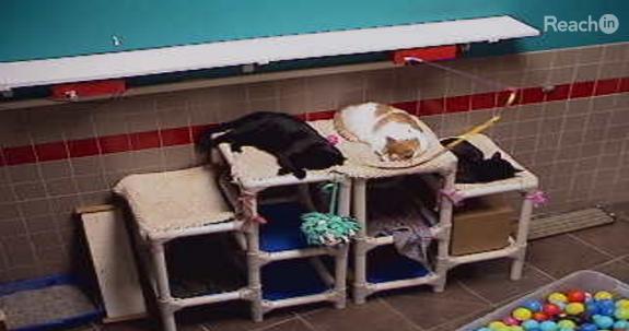 Drei Katzen schlafen, ein ignoriertes Spielzeug zuckt noch