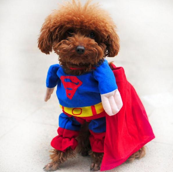 Superhund-Kostüm: Wenn du willst, dass dein Haustier dich hasst