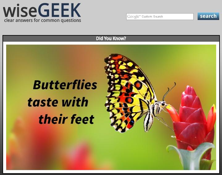 wiseGEEK: butterflies taste with their feet