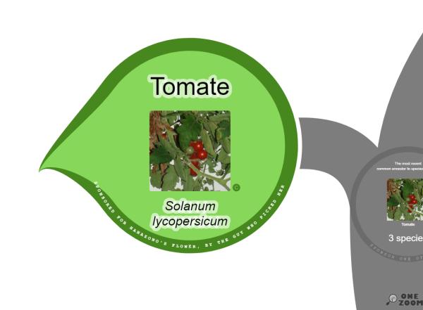 """OneZoom: Das """"Blatt"""" der Tomate."""