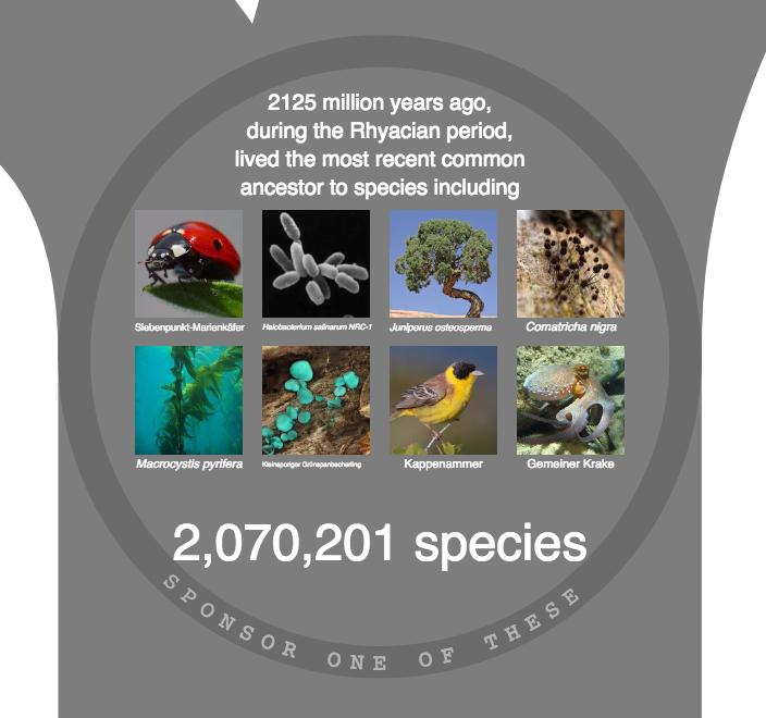 OneZoom: Der letzte gemeinsame Vorfahr lebte vor 2125 Millionen Jahren.